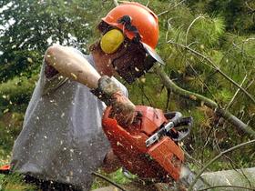 Alleinarbeit im Wald: So muss die Rettungskette im GPS-Zeitalter aufgebaut werden<br /><br />